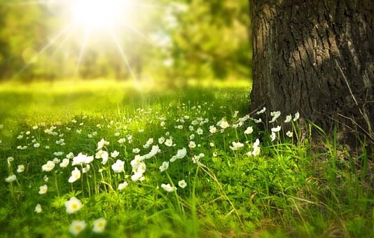 Czy macie Państwo już wiosenne myśli?